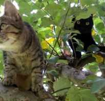 Котенок серо белый полосатый