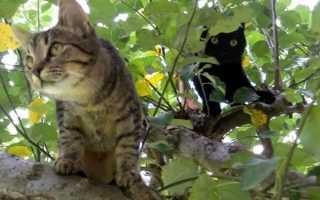 Обычный полосатый кот