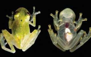 Интересное о лягушках для детей