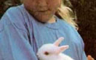 Кролик часто дышит и трясется