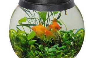 Что нужно купить чтобы завести рыбок