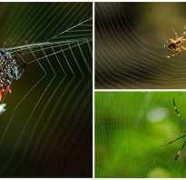 Сколько времени паук плетет паутину