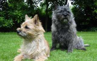 Породы собак которые не линяют
