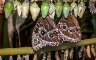 Как перезимовать бабочки в домашних условиях