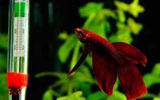 Оптимальная температура для рыбок в аквариуме