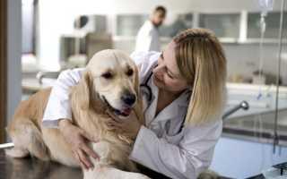 Как вылечить аллергию у собаки