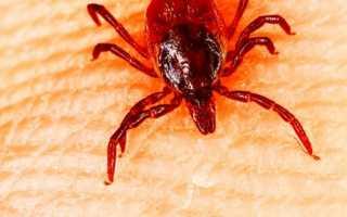 Маленький оранжевый паук