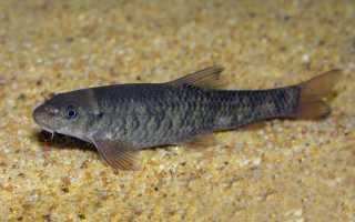 Рыбки гарра руфа польза и вред
