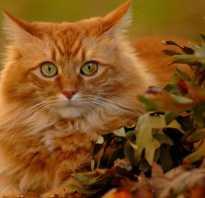 Рыжая кошка и серый кот
