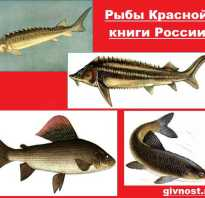 Редкие охраняемые рыбы