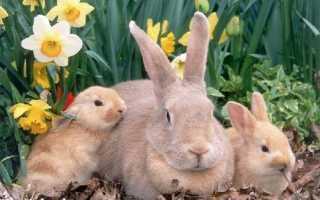 Заболевание кроликов и их лечение