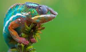 Змея это рептилия или млекопитающее