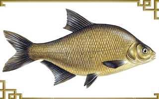 Фото леща рыбы 2кг в воде