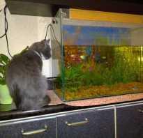Домашние животные рыбы
