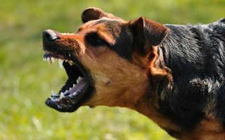 После укуса бешеной собаки