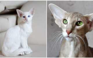 Кошки на которых нет аллергии
