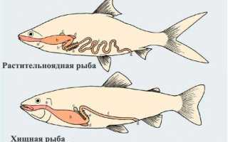 Сколько корма нужно рыбкам