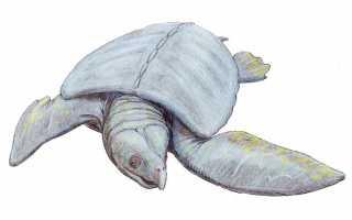 Рот черепахи внутри