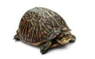 Скорость движения черепахи