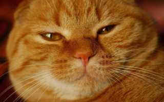 Котята рыжие пушистые фото