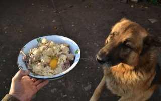 Какой крупой кормить собаку овчарку