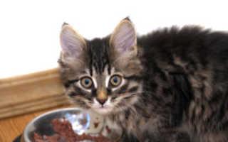 Как часто кормить котенка 6 месяцев