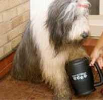 Устройство для мытья лап собакам