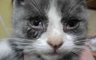 Почему у кошки слезятся глазки