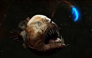 Морские рыбы среда обитания