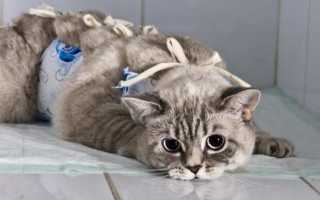 У кота хпн чем лечить