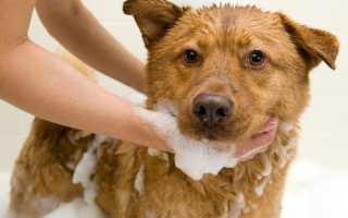 Мытье крупных собак