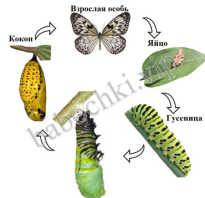 Как содержать бабочку в домашних условиях зимой