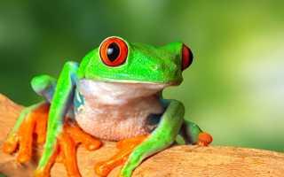 Интересное про лягушек