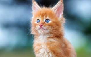 Имя рыжего кота