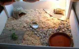 Что можно положить в террариум черепахе
