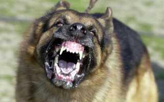 Рейтинг самых опасных пород собак