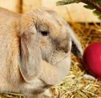 Чем лучше кормить кроликов видео