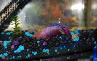 Почему умирают рыбы в аквариуме