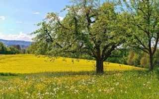 Ветки каких деревьев можно давать попугаям