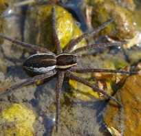 Фото пауков всех видов с названиями