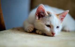 Как лечить котят