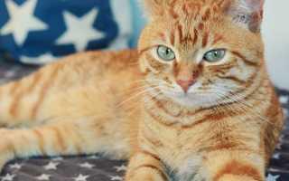 Кличка для кошки девочки рыжего цвета
