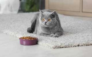 Чем нужно кормить котов