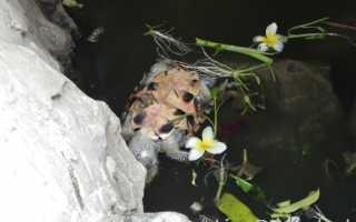 Признаки умершей черепахи