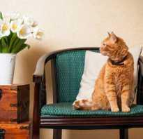 Рыжий котенок фото
