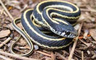 Змея какой класс