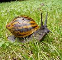 Скорость бега черепахи