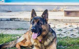 Капли барс против клещей для собак