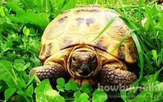 Каких черепах лучше держать дома