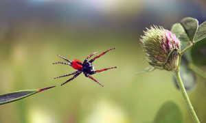 Какают ли пауки